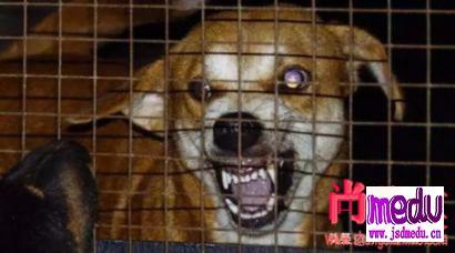 狂犬病潜伏期最长多久?狂犬病潜伏期真的会达几十年吗?