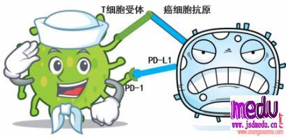 PD-1、PD-L1是什么?耐药后怎么办?