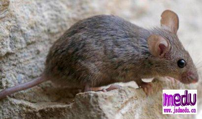 《鼠疫》:今天发生的一切,阿尔贝·加缪早写进了小说!