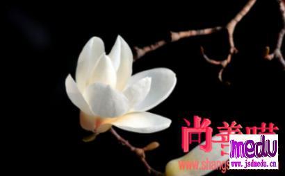 """李文亮医生""""心灵独白"""""""