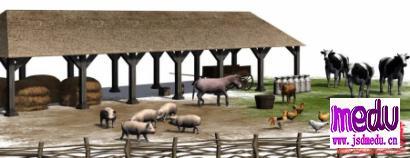 猪是怎么走向餐桌的?小猪从哪里来?猪如何长大?
