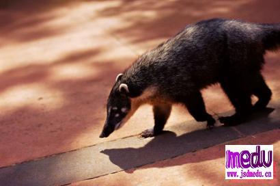 预防类似新型冠状病毒及非典SARS等灾难,我们必须与野生动物保持合理距离
