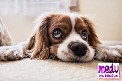 宠物狗检出新冠病毒,狗狗还能养吗?