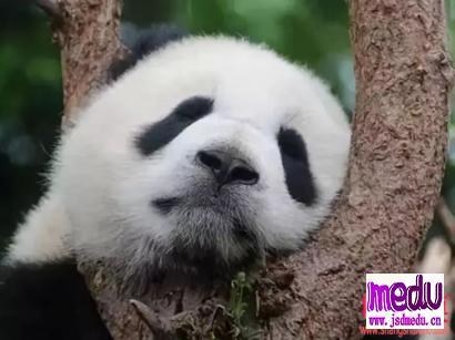 """""""熊猫眼""""是因为肾亏吗?"""