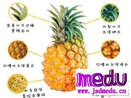 菠萝凤梨到底什么区别?
